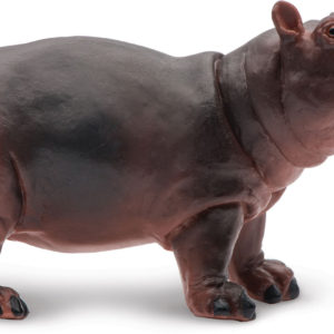 Hippopotamus BabY
